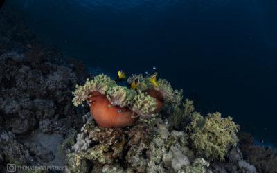Udstyr til dykning